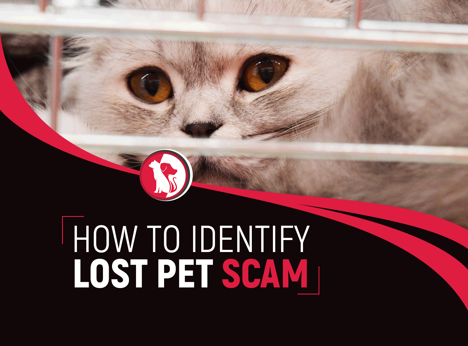 How to Identify Lost Pet Scam from Having and Encountered Them Before
