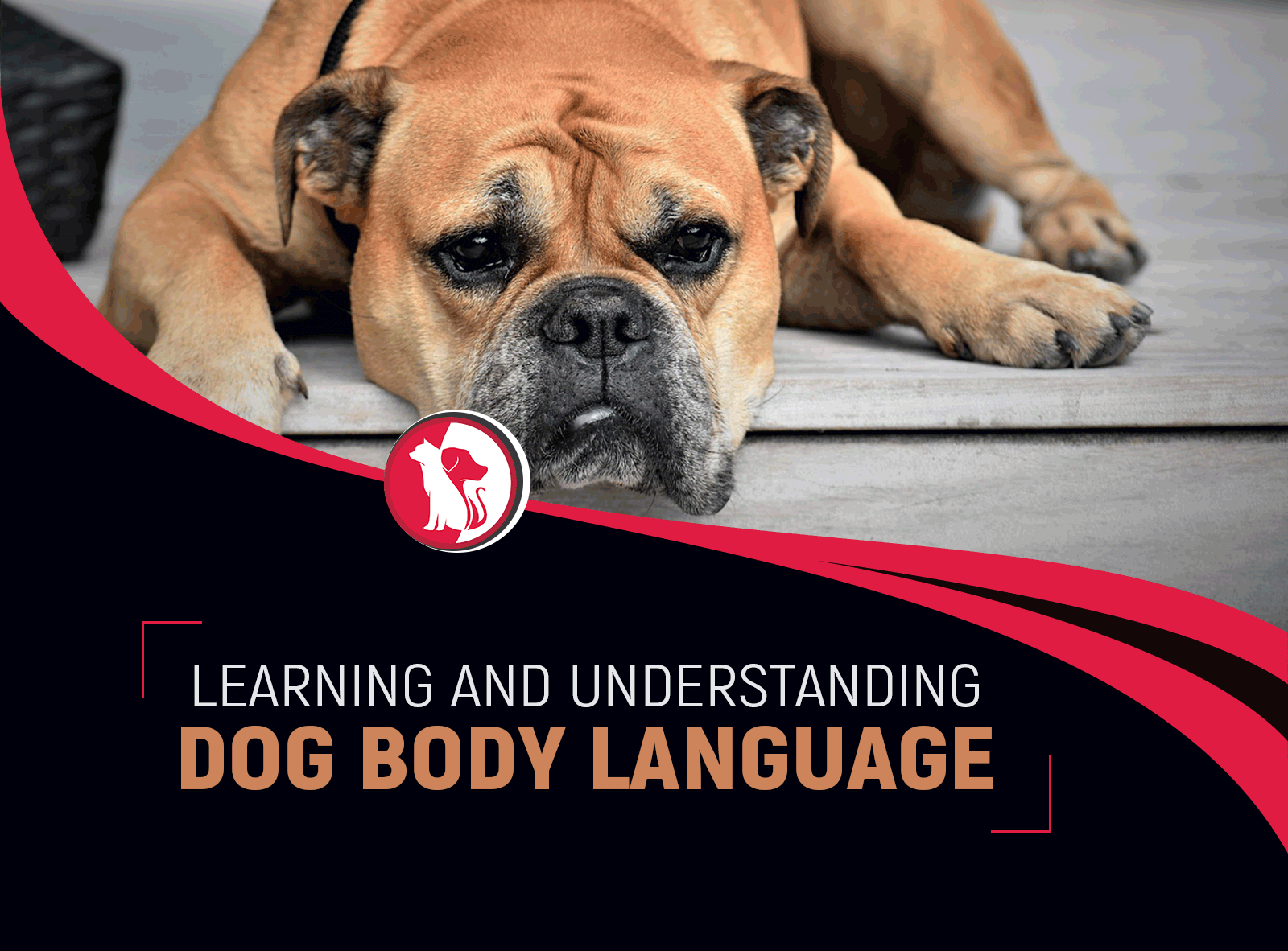 Learning and Understanding Dog Body Language