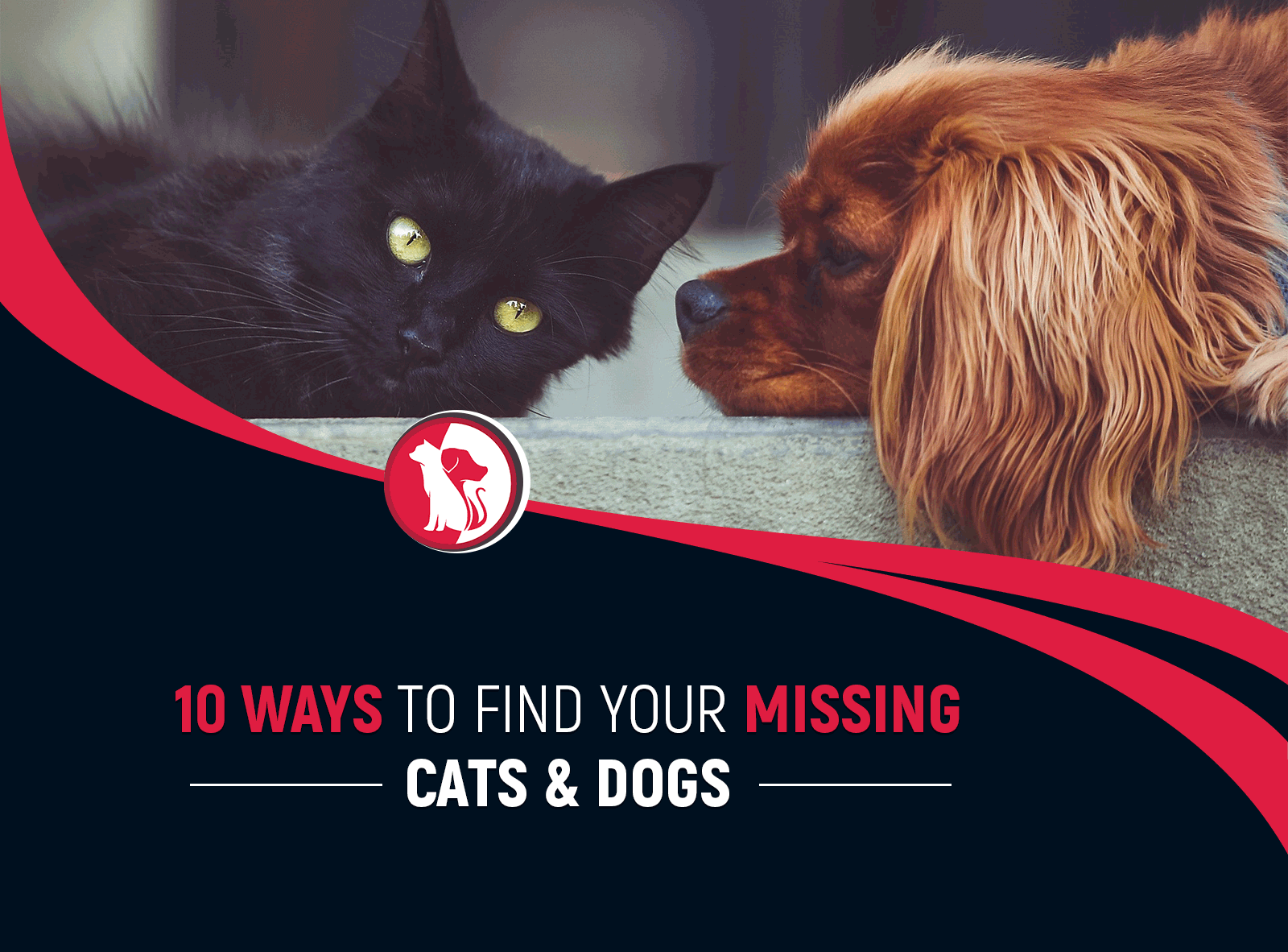 TOP 10 WAYS TO FIND YOUR MISSING CATS AND DOGS