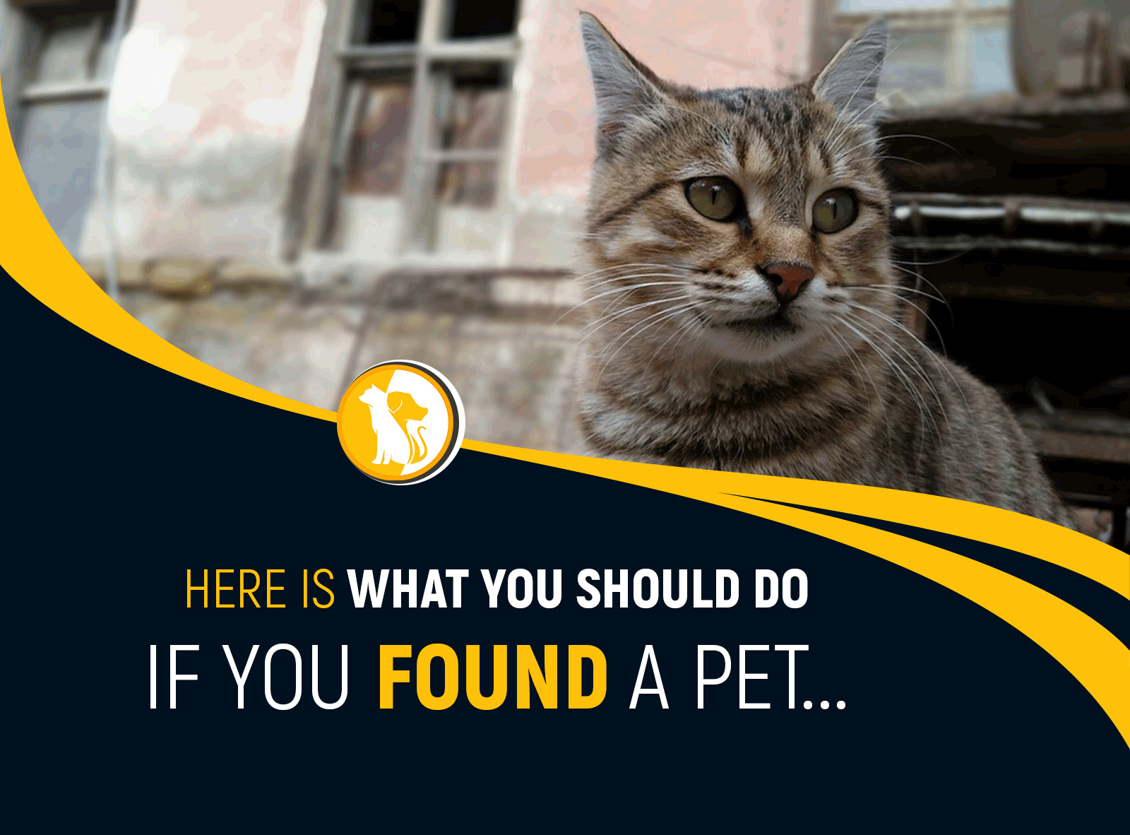 FOUND A PET? HERE WHAT YOU SHOULD DO IF YOU FOUND PETS