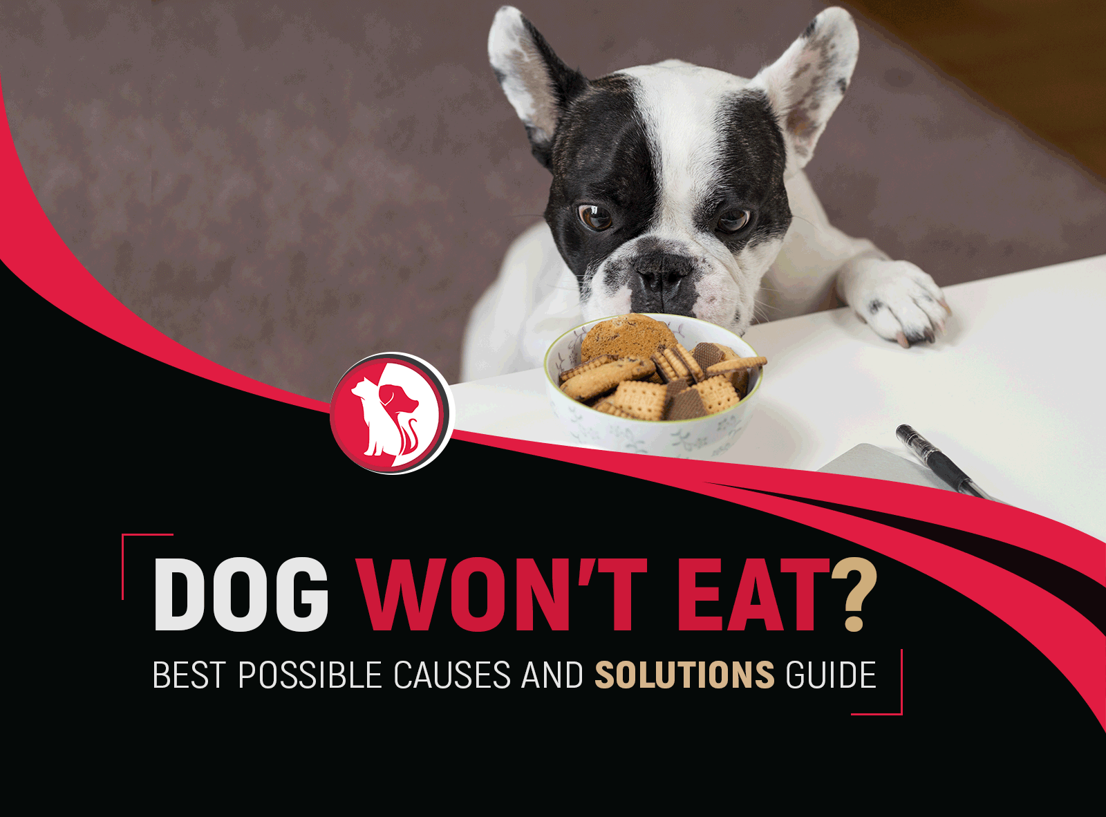 DOG WON'T EAT? BEST POSSIBLE CAUSES AND APPETITE SOLUTIONS GUIDE