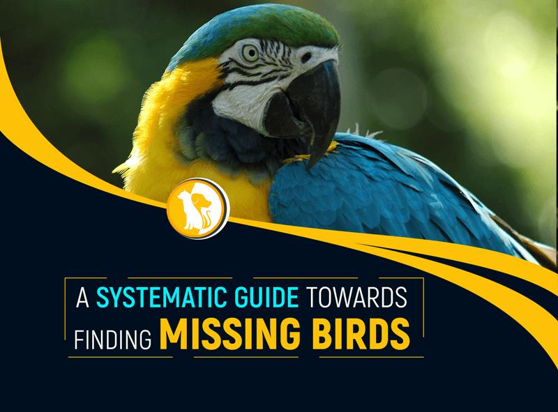 Best Ways To Find Your Missing Bird