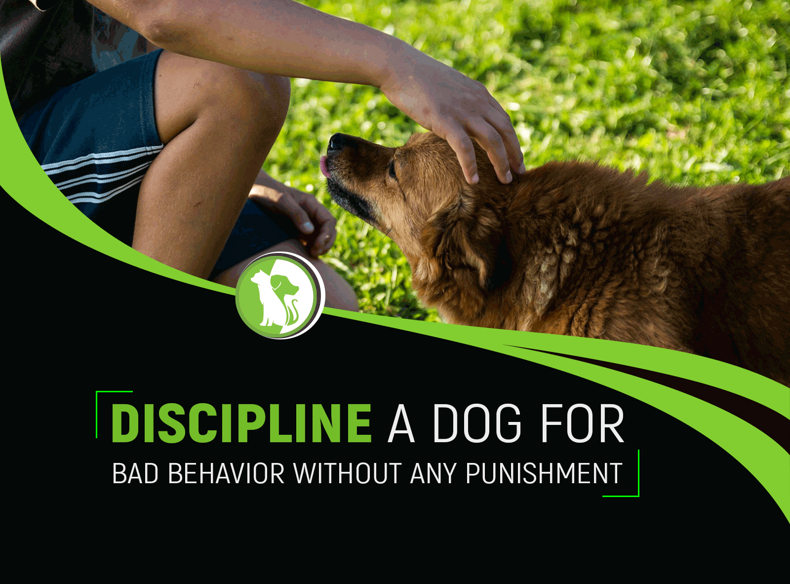 How to Discipline a Dog for Bad Behavior Without Any Punishment