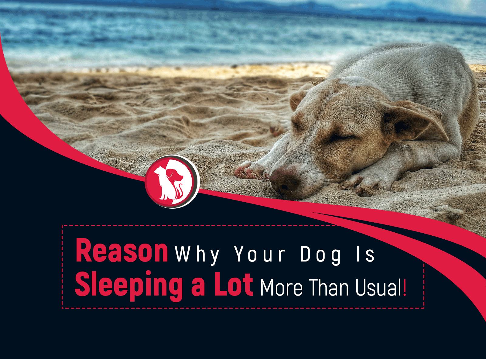 Top 10 Reasons Why Your Dog Is Sleeping a Lot More Than Usual