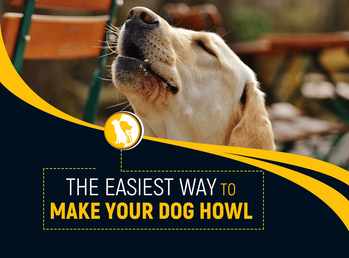 The Easiest Way to Make Your Dog Howl