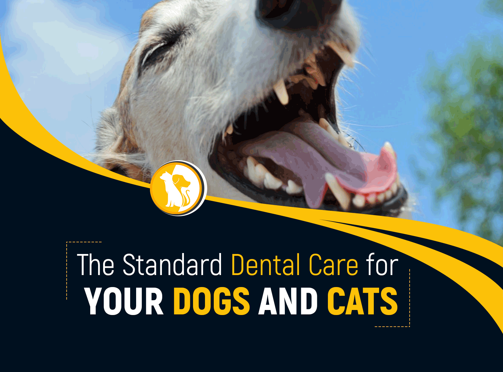 The Standard Dental Care for Your Dogs and Cats