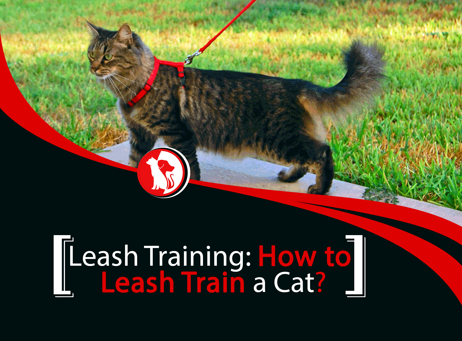 Leash Training: How to Leash Train a Cat or Kitty