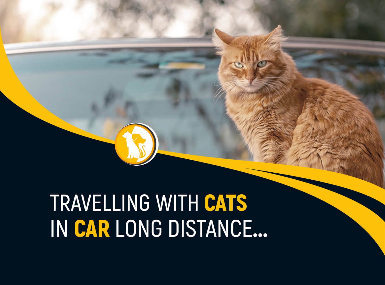 Traveling with Cats in Car Long Distance: Road Trip Tips