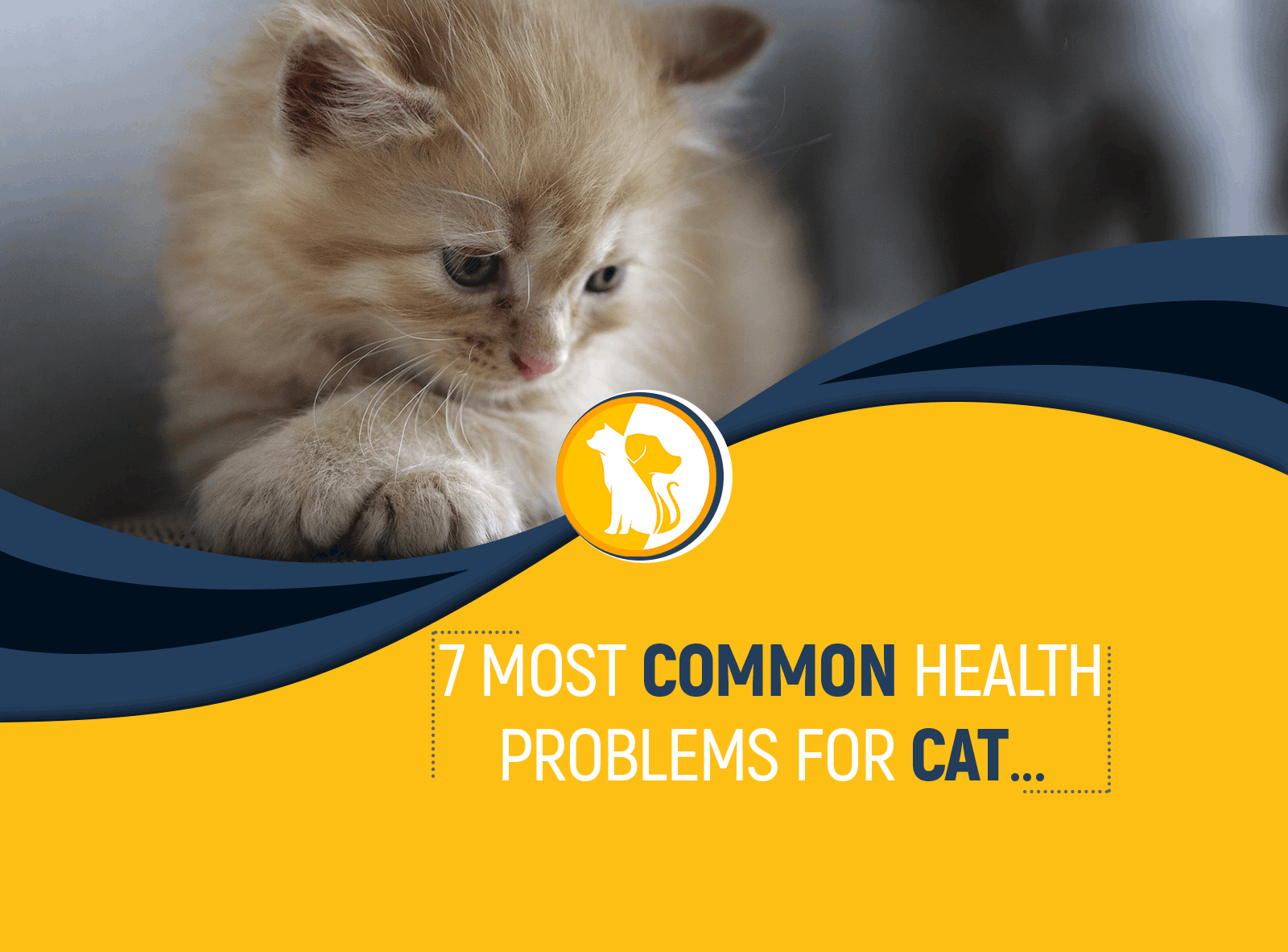 7 Most Common Health Problems for Cat