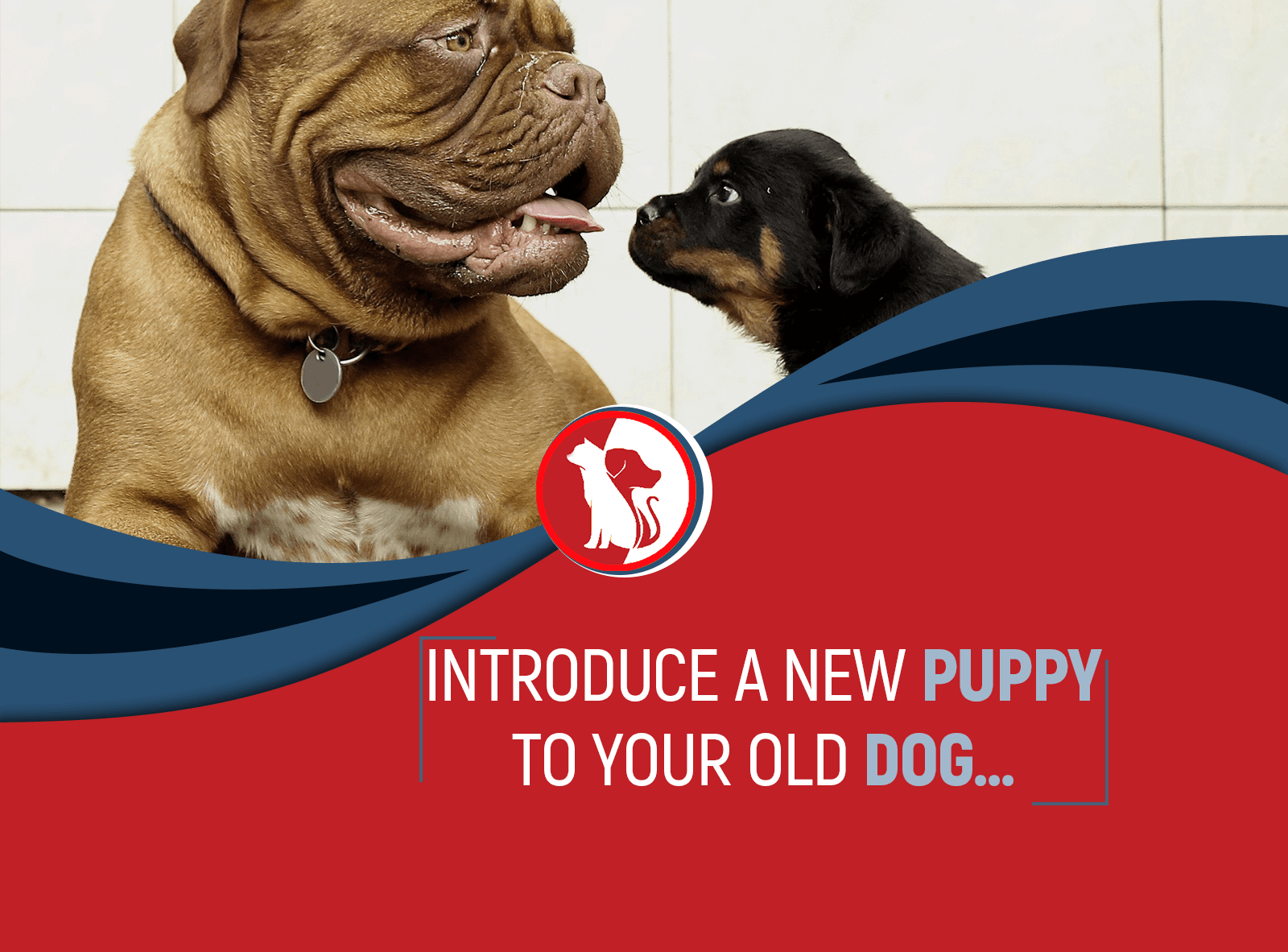 How to Introduce a New Puppy to Your Old Dog