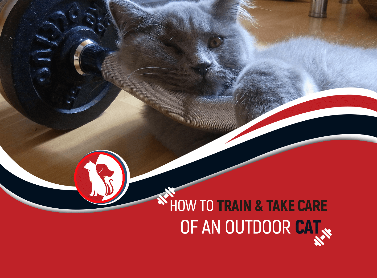 How to Train & Take Care of an Outdoor Cat