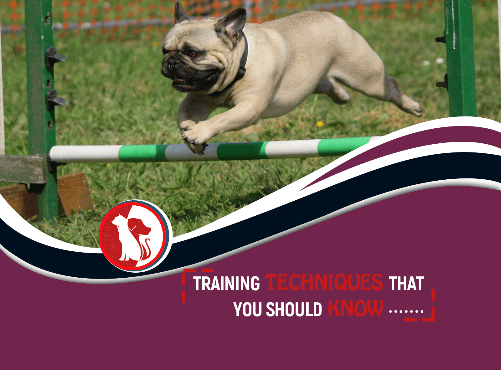 Dog Training Techniques That You Should Know