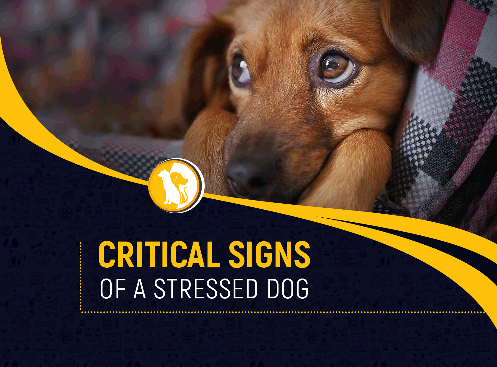 Critical Signs of a Stressed Dog and How to De-Stress It Quickly