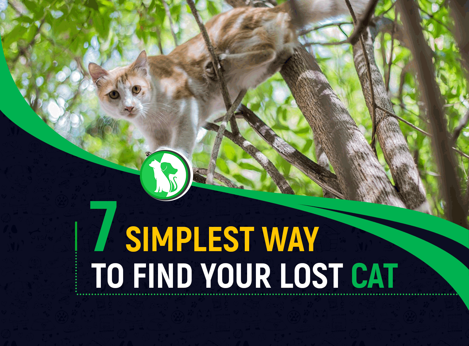 7 Simplest Ways to Find Your Lost Cat