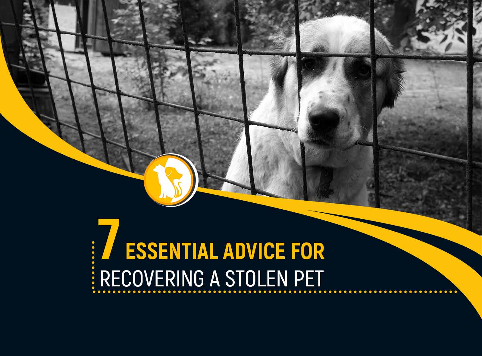 7 Essential Advice for Recovering a Stolen Pet