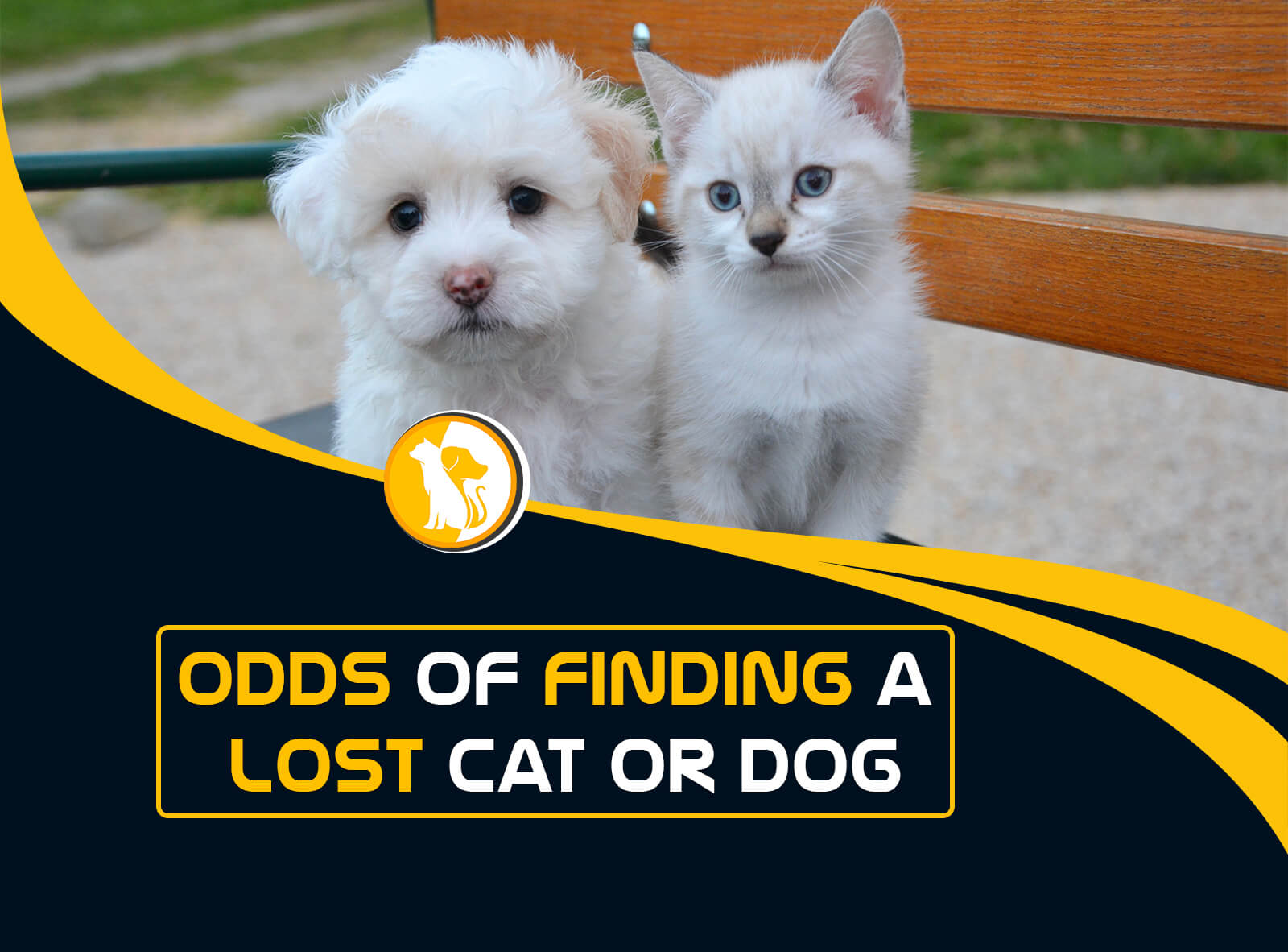What Are the Odds of Finding a Lost Cat or Dog?