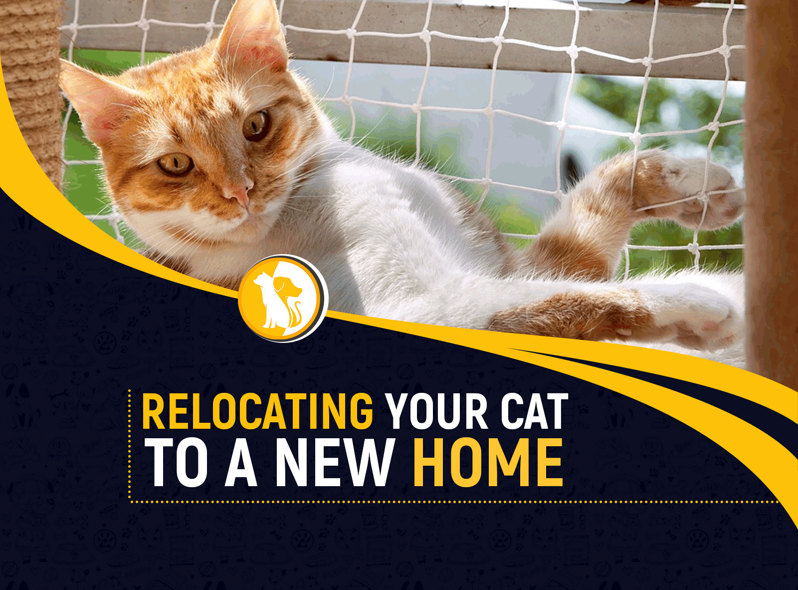 How to Relocate Your Cat to a New Home