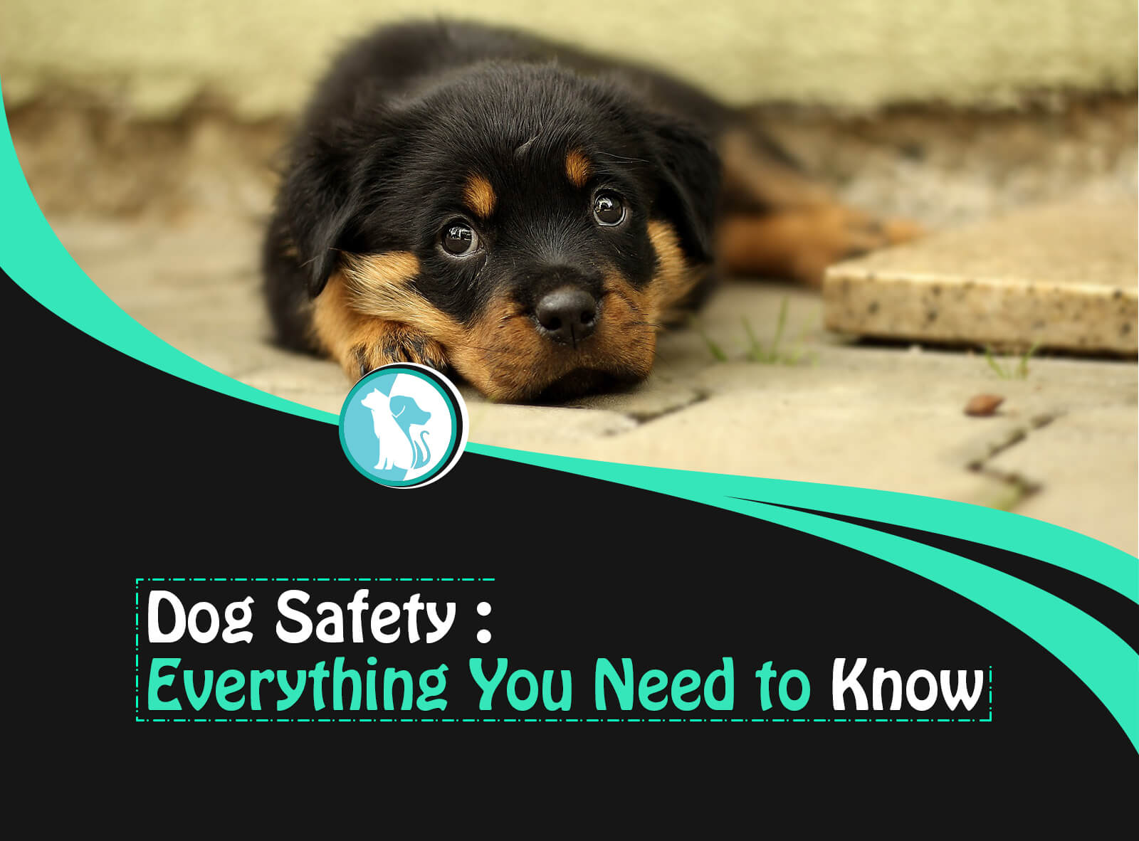 Dog Safety: Everything You Need to Know to Keep Your Dog Safe