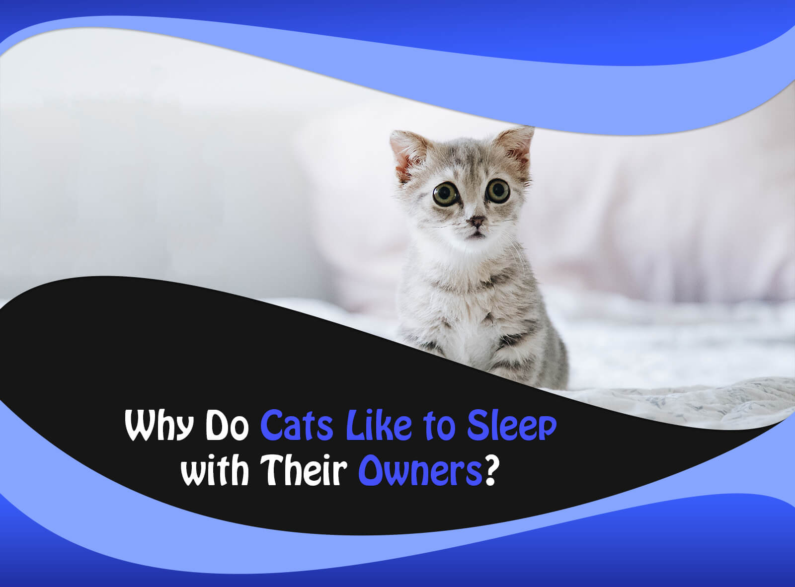Why Do Cats Like to Sleep with Their Owners?