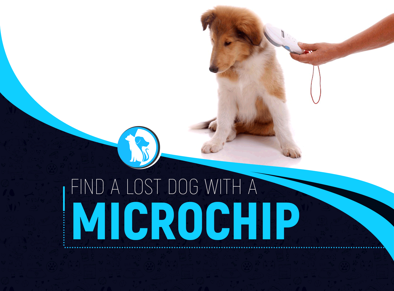How to Find a Lost Dog with a Microchip