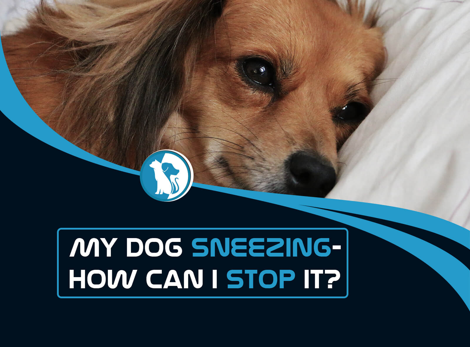 Why Is My Dog Sneezing and How Can I Stop It?