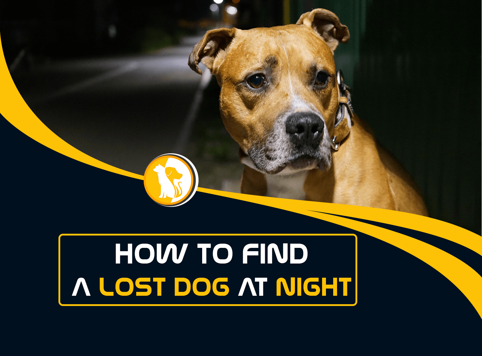 How to Find a Lost Dog at Night?