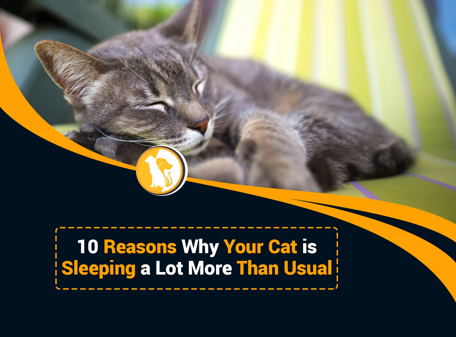 10 Reasons Why Your Cat is Sleeping a Lot More Than Usual