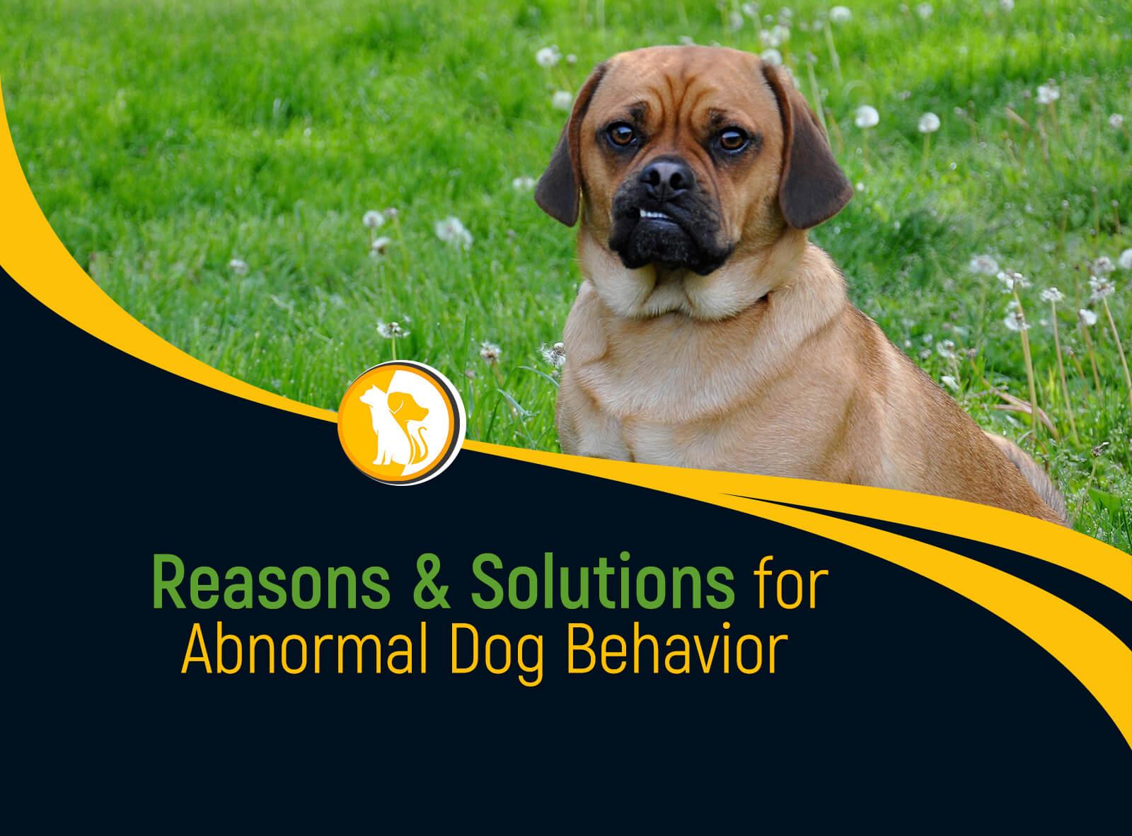 Reasons & Solutions for Abnormal Dog Behavior