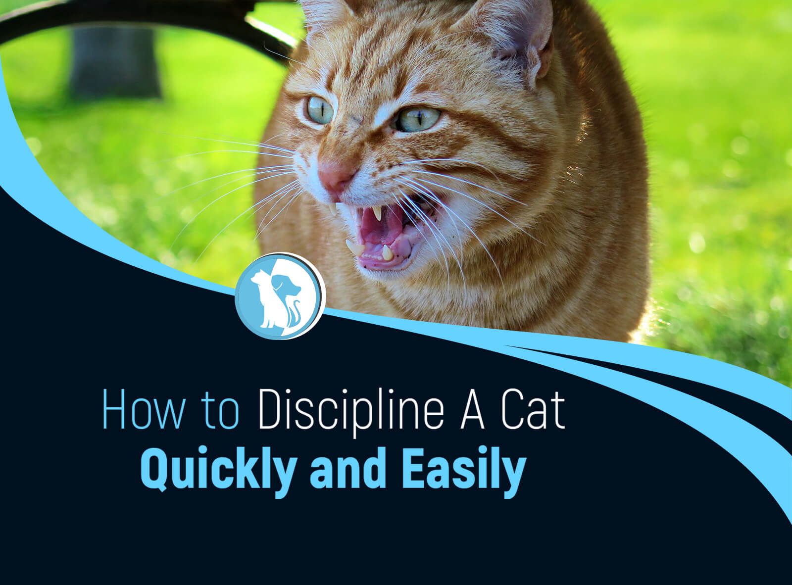 How to Discipline A Cat Quickly and Easily