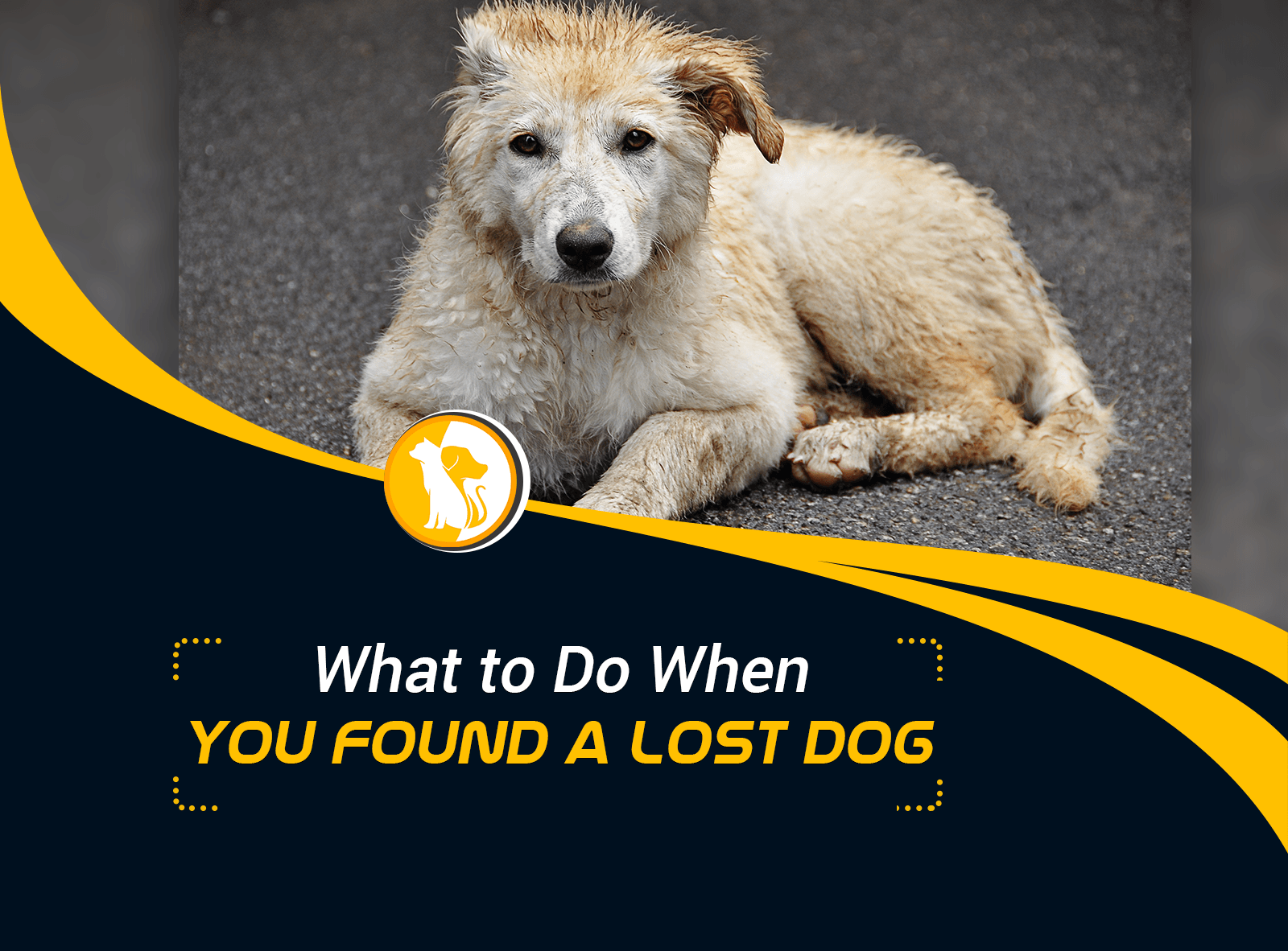 What to Do When You Found a Lost Dog