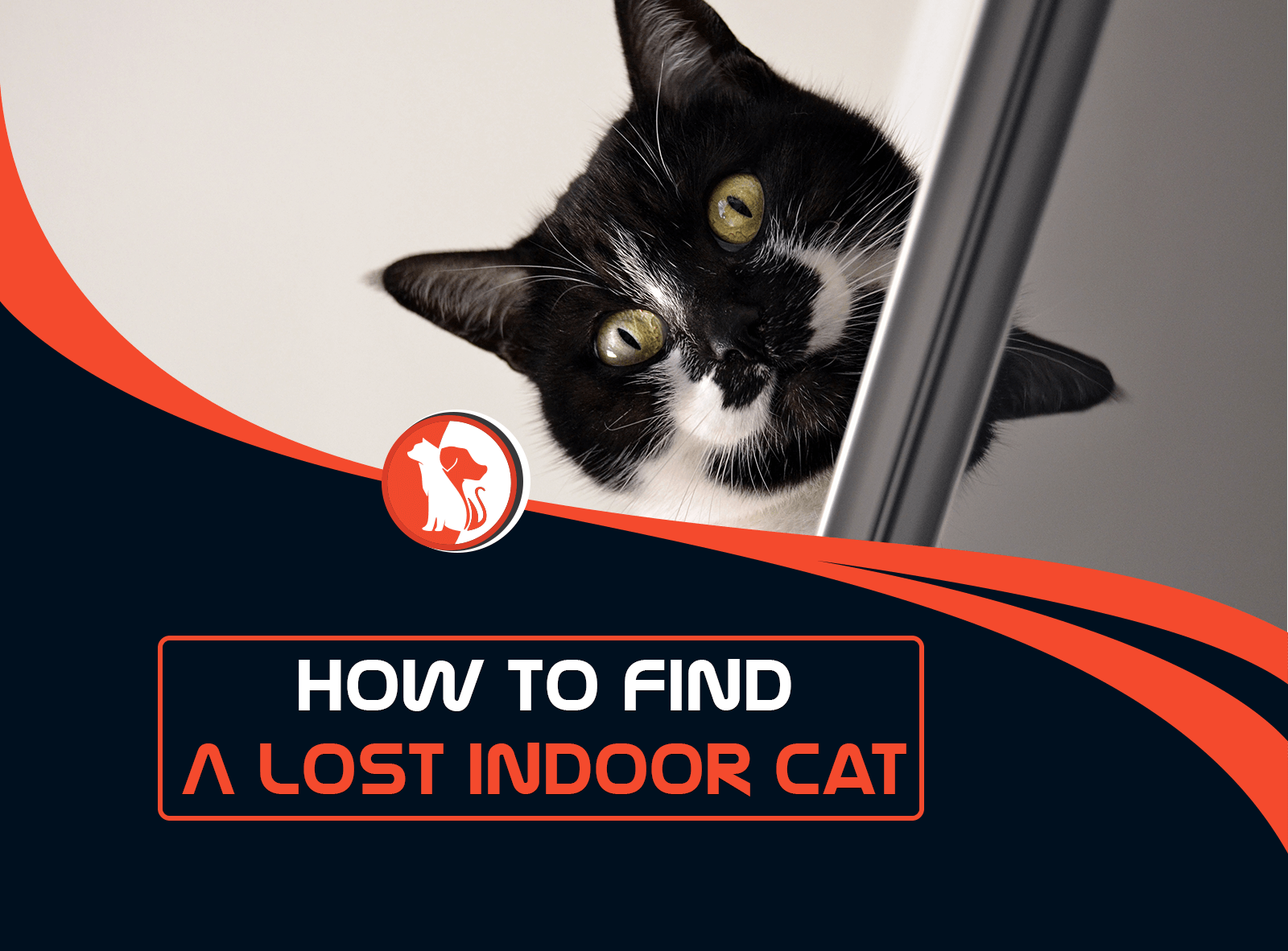How to Find a Lost Indoor Cat