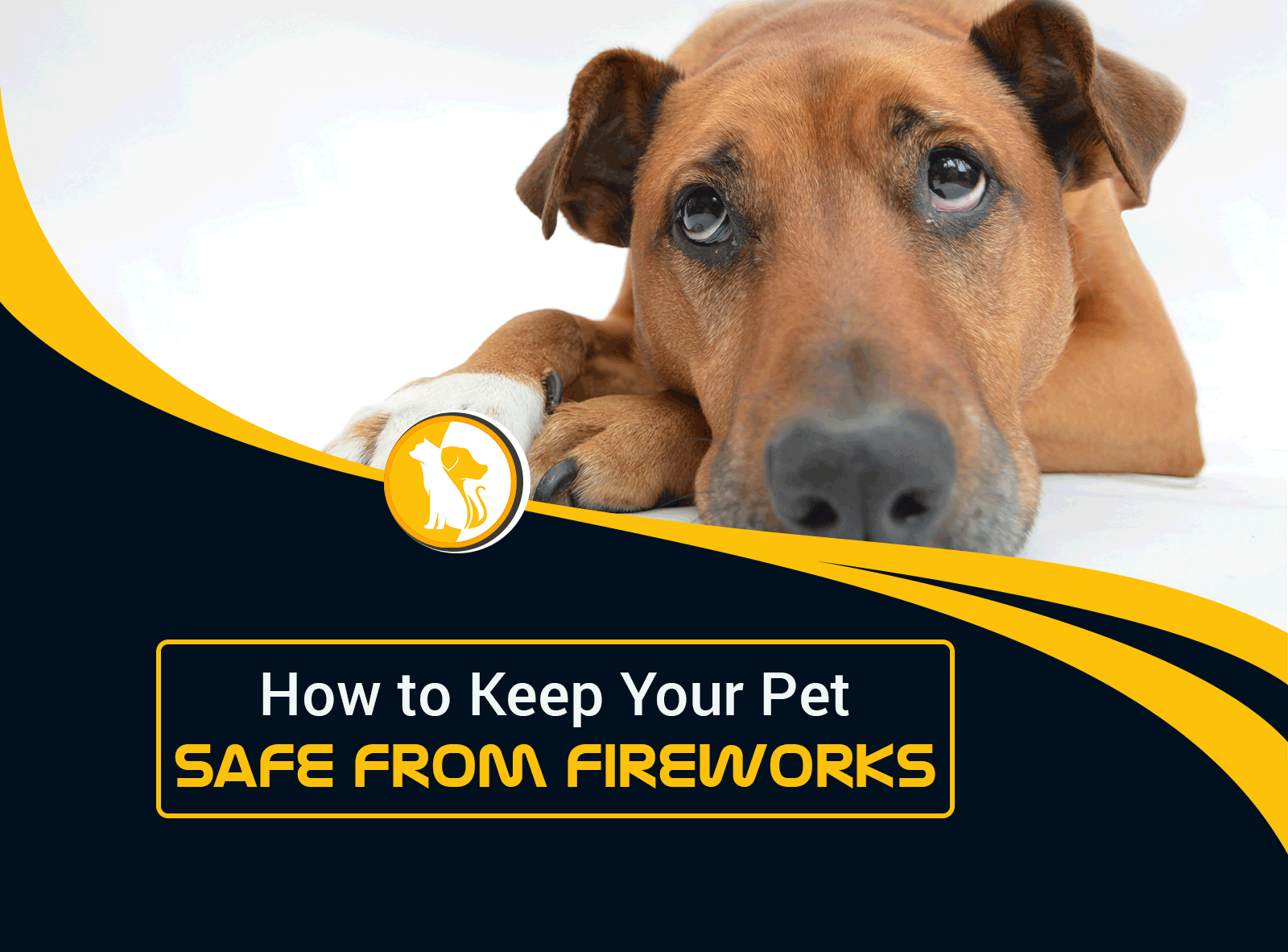 How to Keep Your Pet Safe from Fireworks