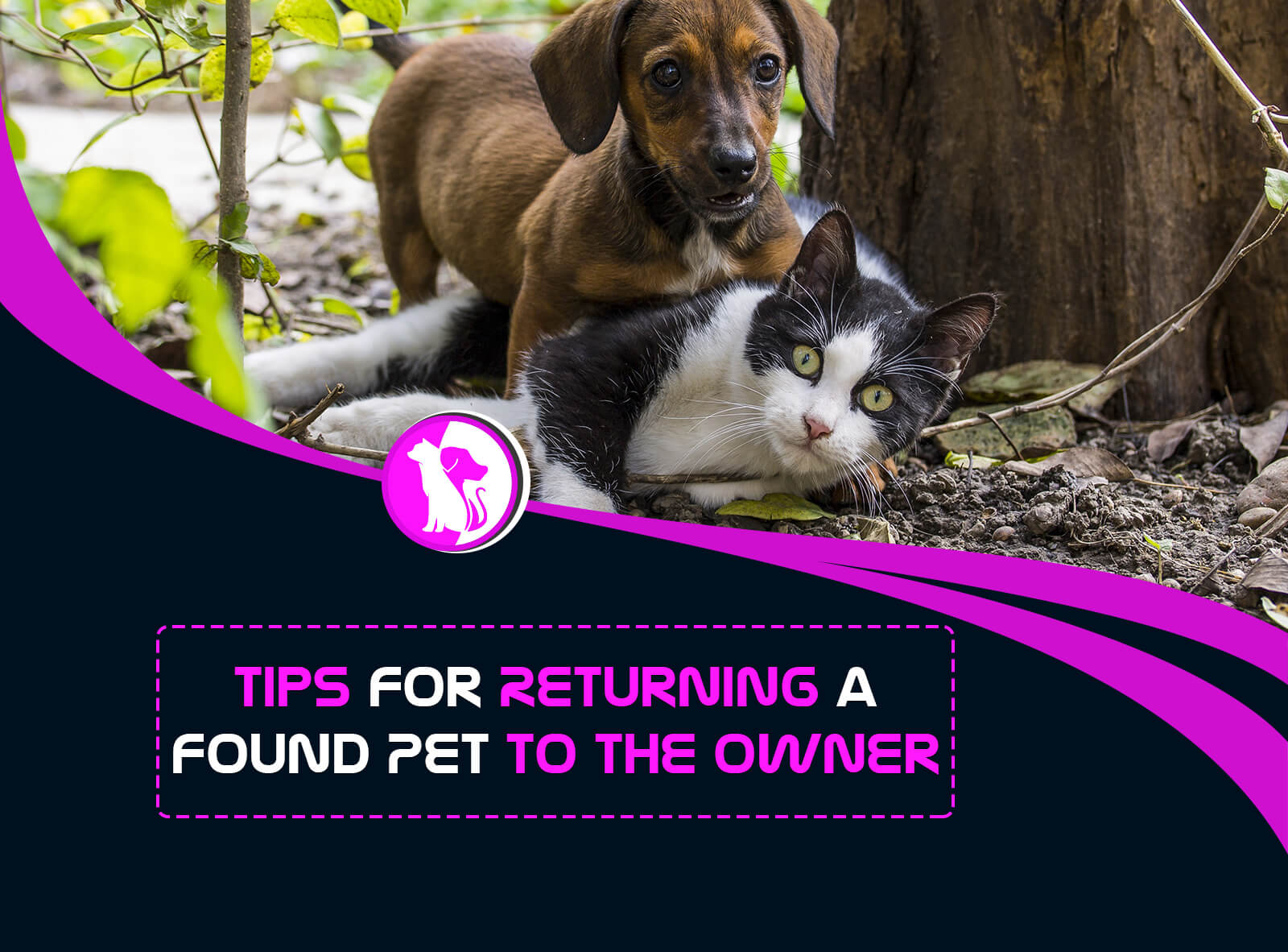 Tips for Returning a Found Pet to the Owner
