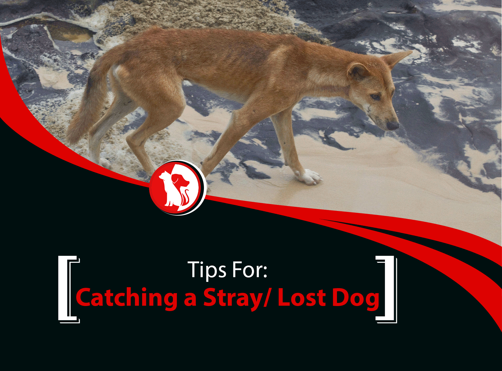 Tips for Catching a Stray/Lost Dog