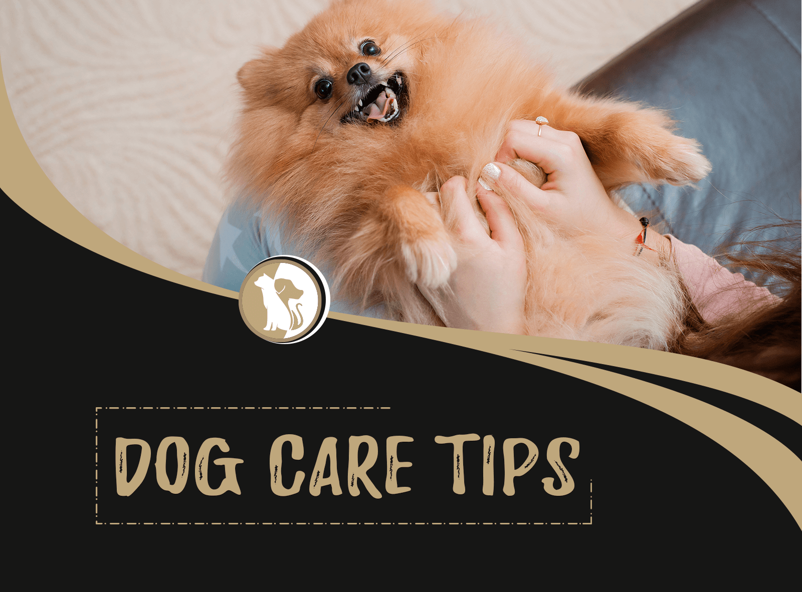 Dog Care Tips Towards Keeping Your Dog Healthy