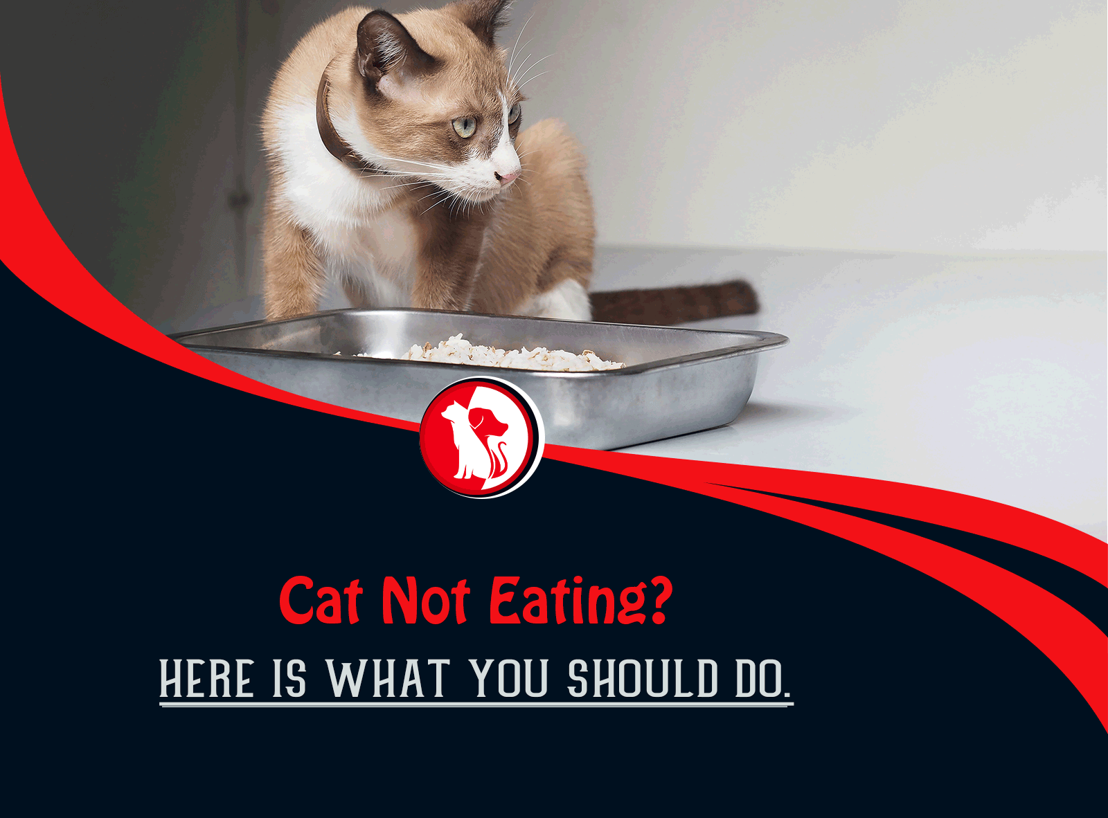 Cat Not Eating? Here Is What You Should Do