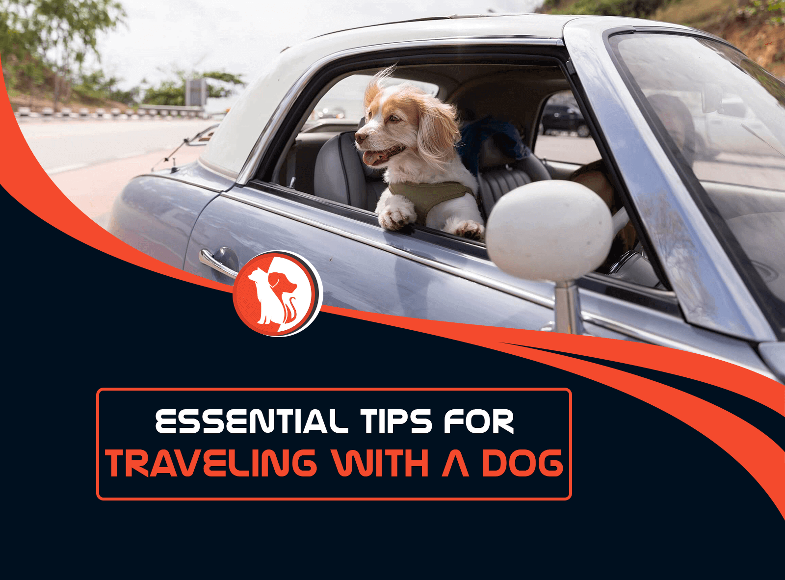 Essential Tips for Traveling with a Dog