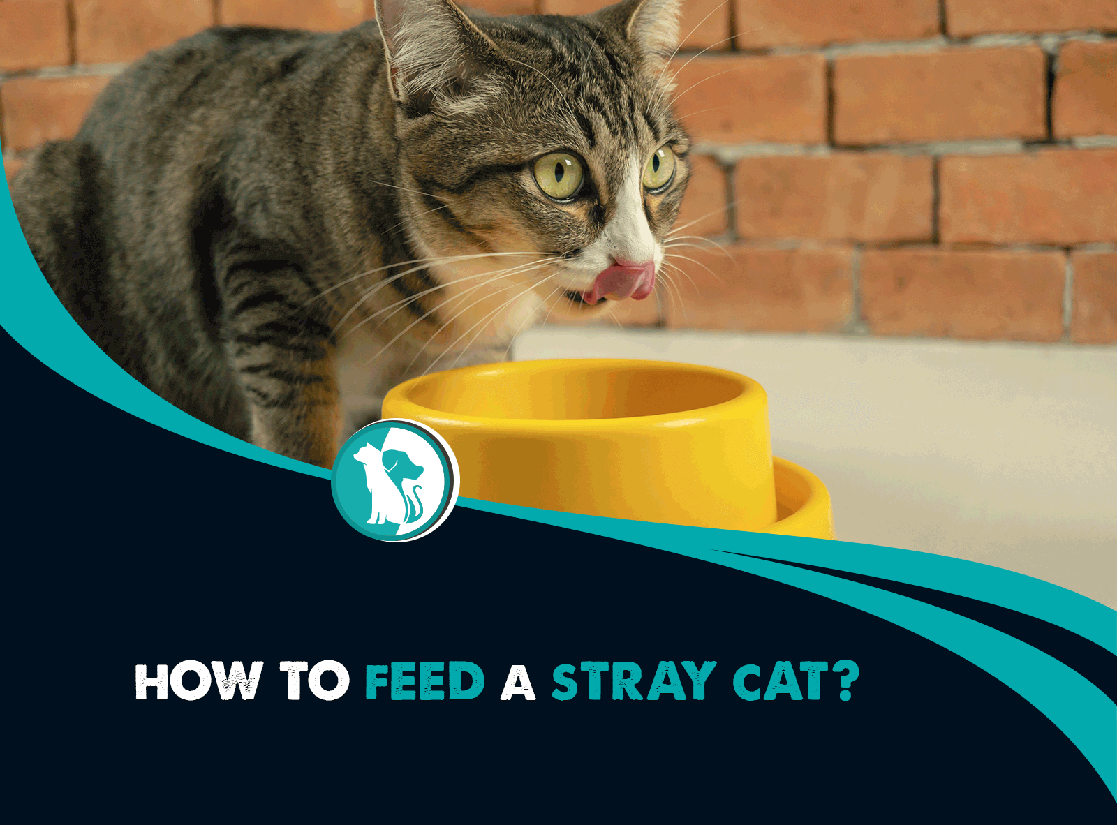 What To Feed A Stray Cat & How To Help them
