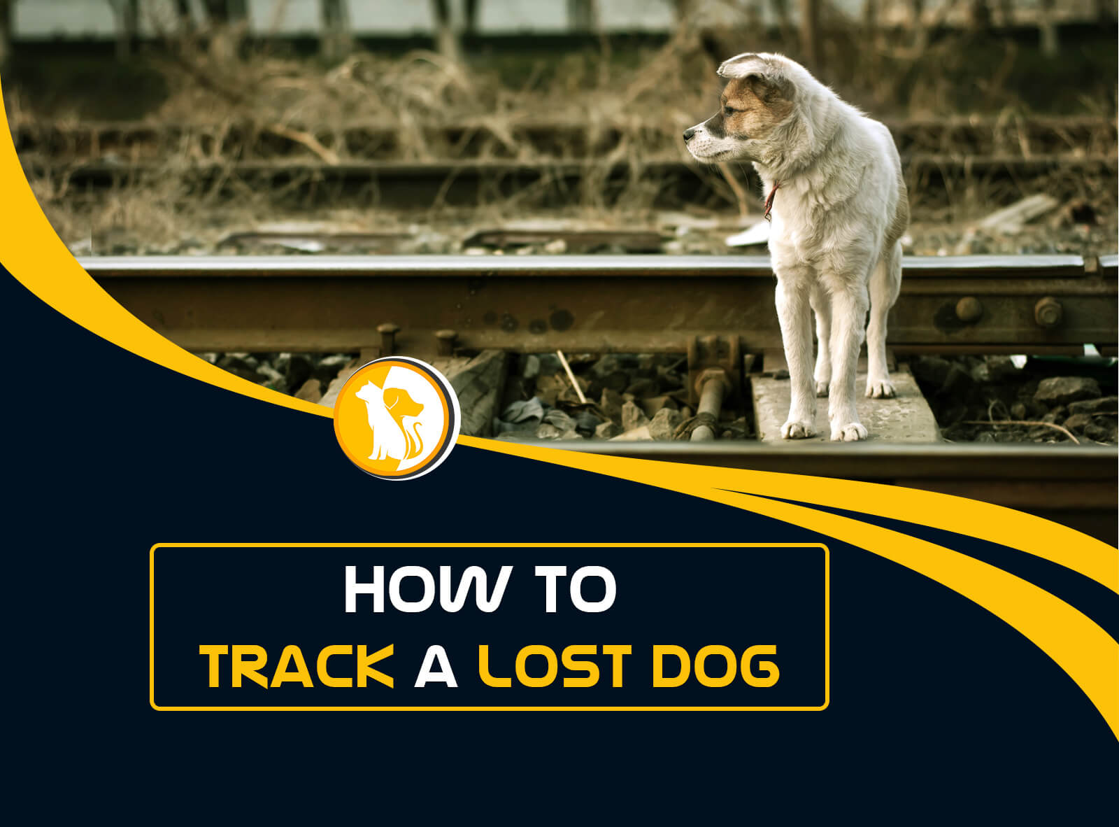 How to Track a Lost Dog