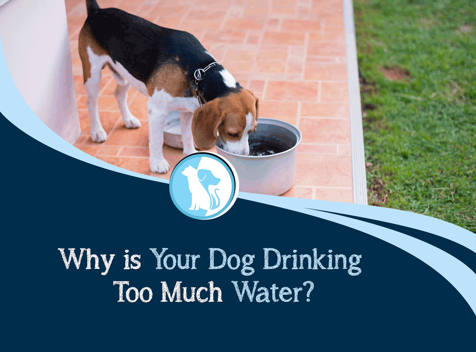 Why is Your Dog Drinking Too Much Water?
