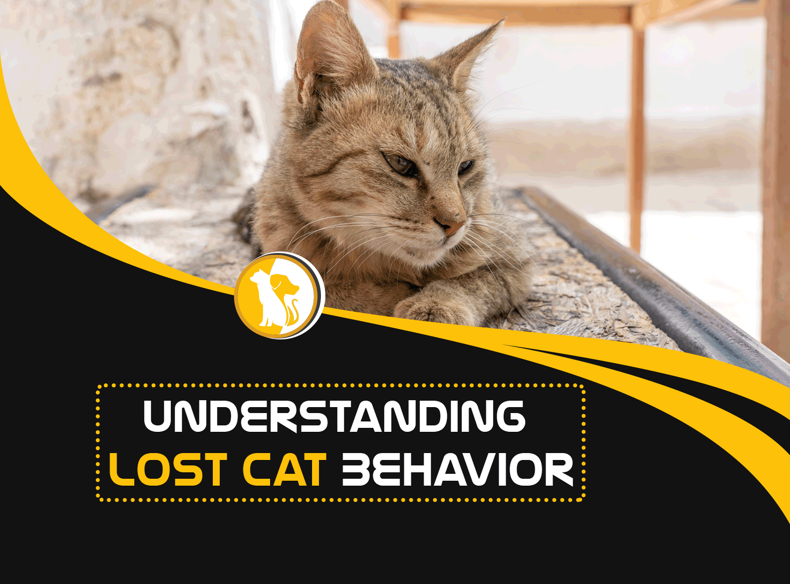 Understanding Lost Cat Behavior