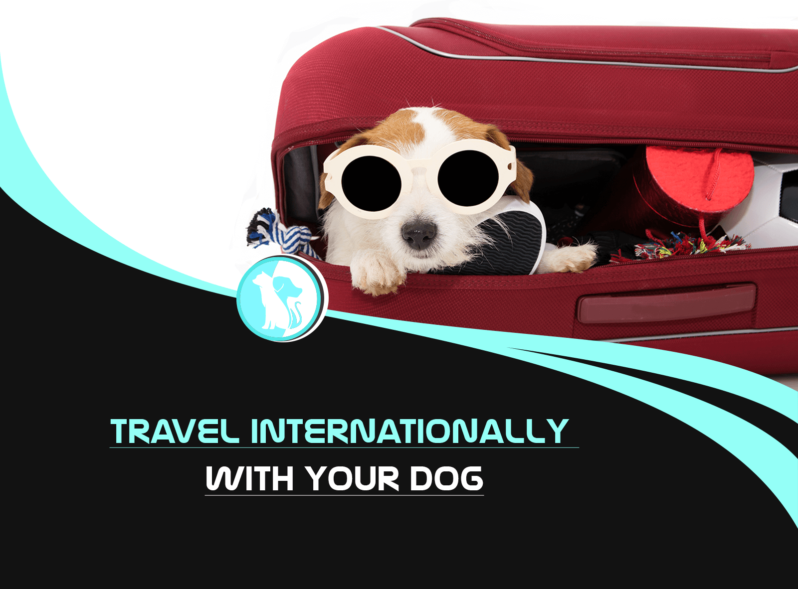 How to Travel Internationally with Your Dog