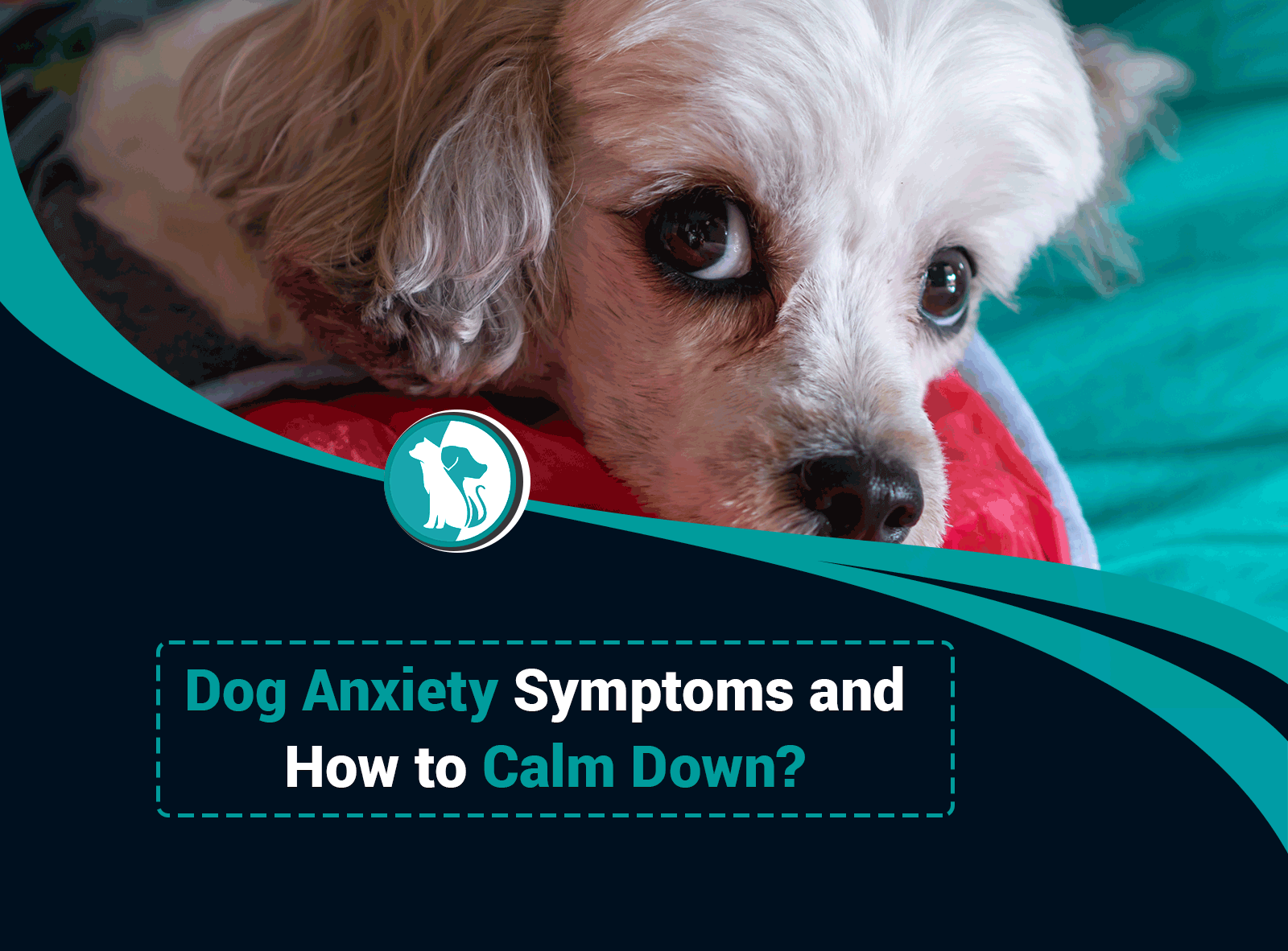 Dog Anxiety Symptoms and How to Calm Down