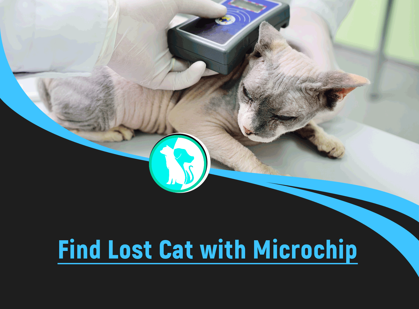 How to Find a Lost Cat with a Microchip