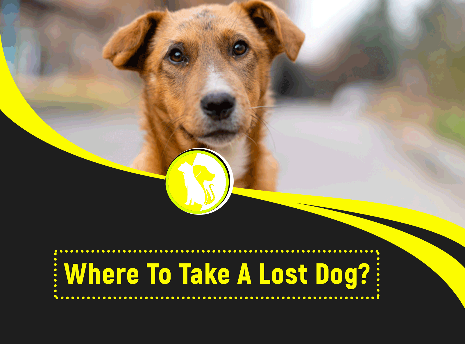 Where to Take a Lost Dog?