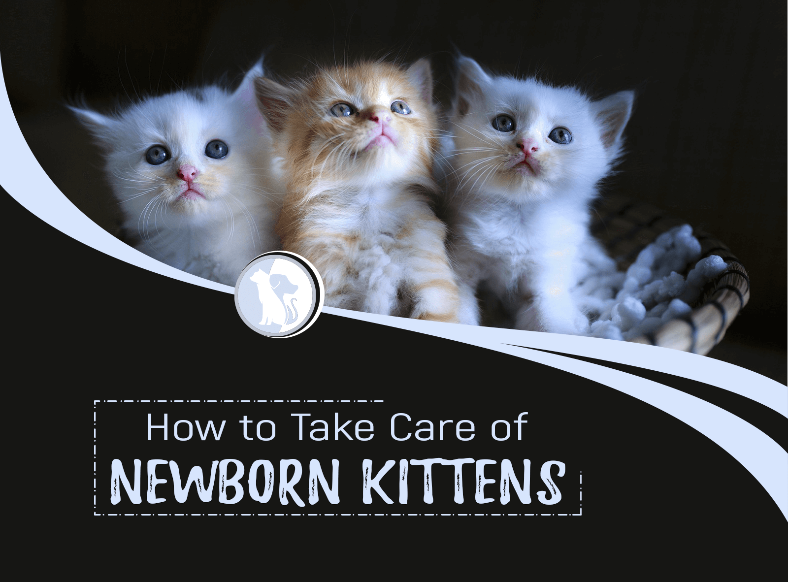 How to Take Care of Newborn Kittens