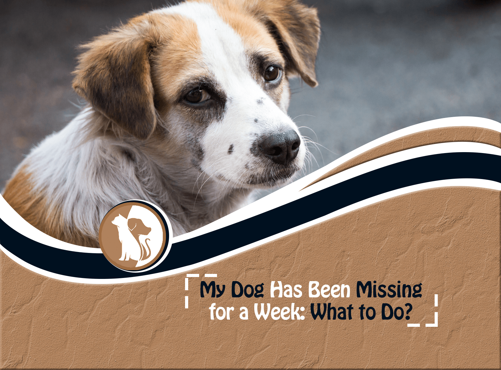 My Dog Has Been Missing for a Week: What to Do?