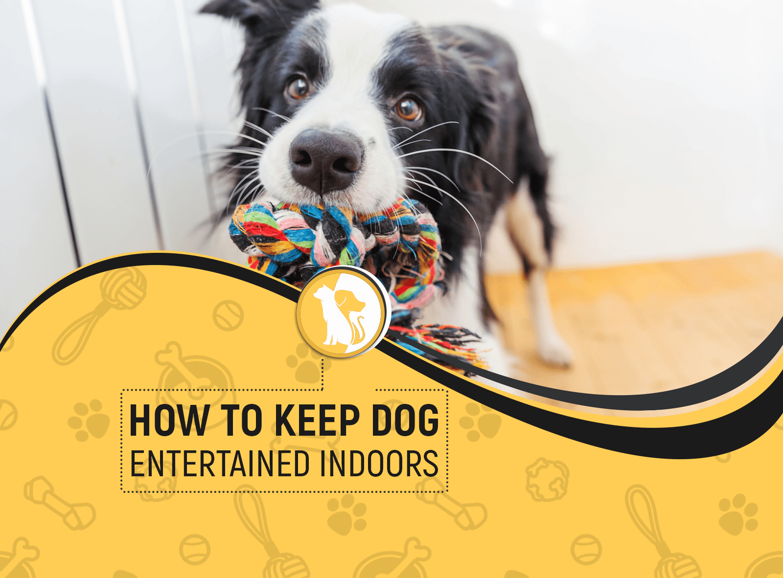 How to Keep a Dog Entertained Indoors