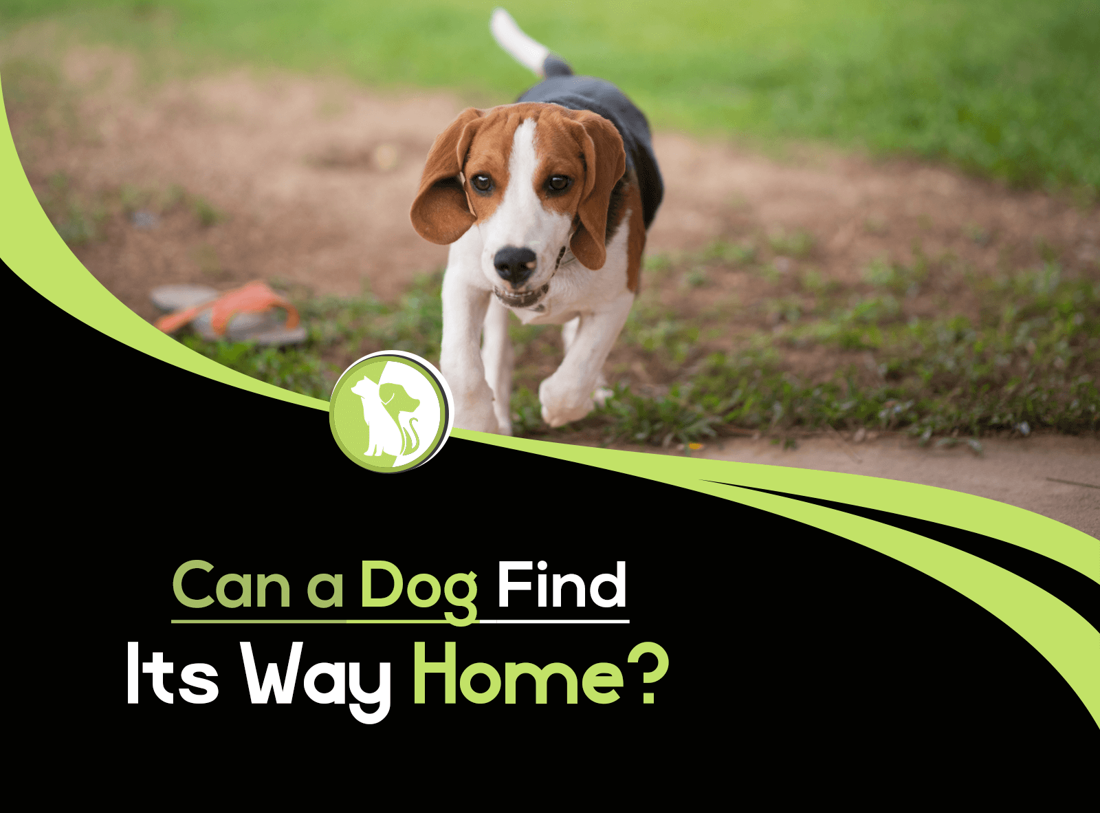 Can a Dog Find Its Way Home?