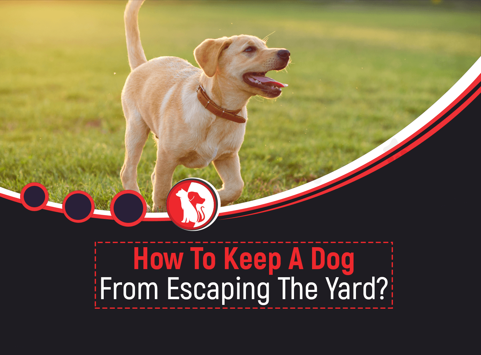How to Keep a Dog from Escaping the Yard